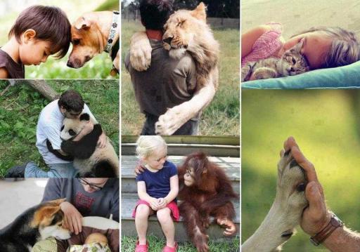 Hayvanları sevmek